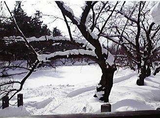 弘前公園. 冬.jpg